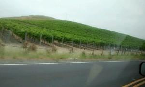 Llegando a Napa Valley